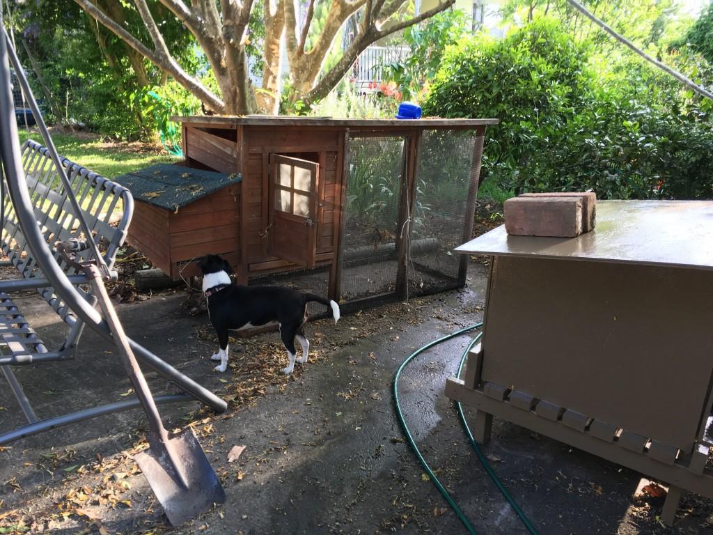 chicken-house-complete-e1479298972645-1024x768